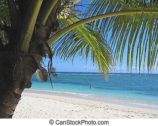 Palm tree and blue sea from Nattes island, Nosy Boraha, Sainte,Marie island, Madagascar