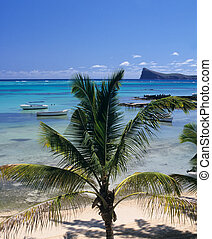 Palm tree and lagoon Mauritius Island - Palm tree, Lagoon...