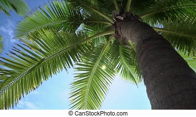 Palm tree and sky in the tropical shadow