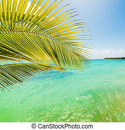 Palm tree and turquoise water in Sainte Anne shore, Guadeloupe. Lesser Antilles, Caribbean sea
