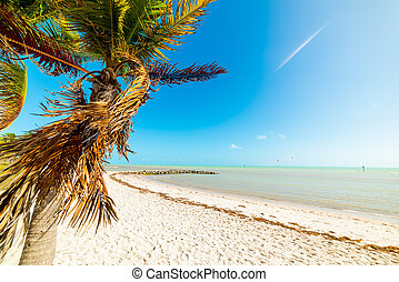 Palm tree and white sand in Smathers beach in Key West