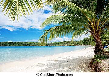 Palm tree at sea.