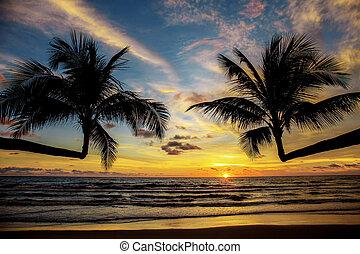 Palm tree at sunset.