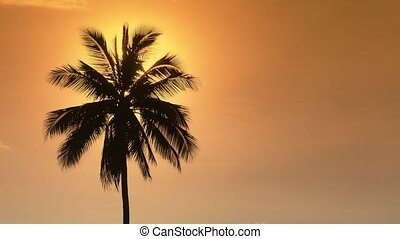 Palm tree at sunset. The sun hides behind a lonely palm tree in the yellow evening sky.