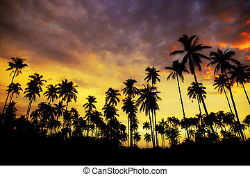 Palm tree at sunset with colorful.