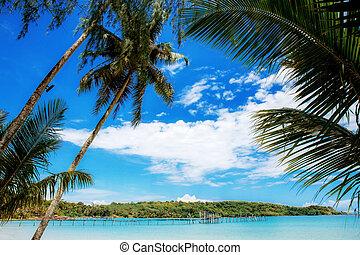 Palm tree at the sea.