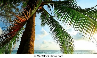 Palm tree at the tropical beach