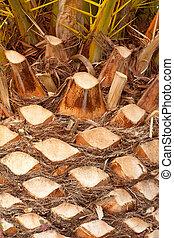 Palm Tree Background Texture Pattern