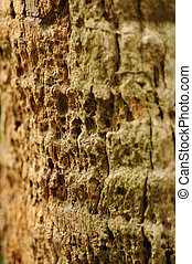 Palm Tree Bark for Background - close up of palm tree bark...