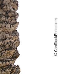 Palm tree bark margin