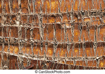 Palm Tree Bark - Palm tree bark texture or background.
