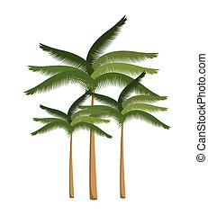 palm tree beach design isolated