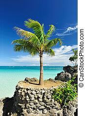 Palm tree - Beautiful palm tree at remote island, ...