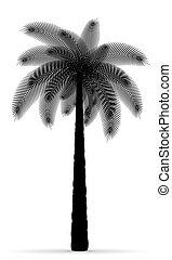 palm tree black outline silhouette vector illustration