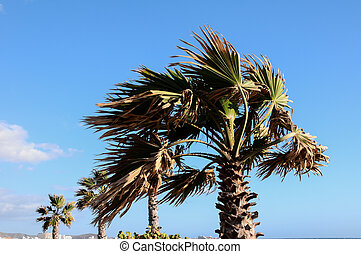 Palm Tree Blowing In The Wind