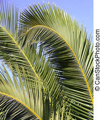 Palm tree branch details