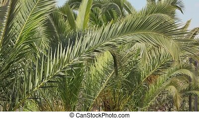 Palm tree branches - Abstract background of palm tree...