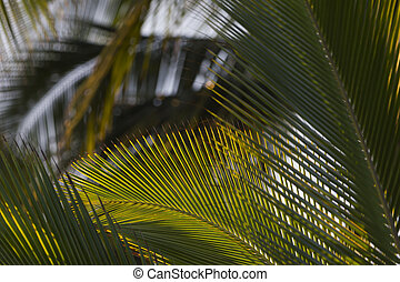 Palm tree branches - Palm fronds