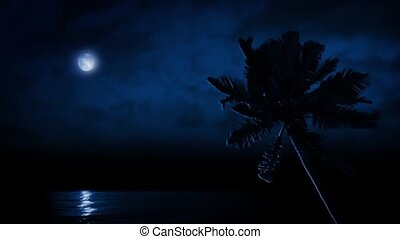 Palm Tree By Sea Lit Up By Moon