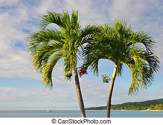 Palm tree by the ocean on a tropical island