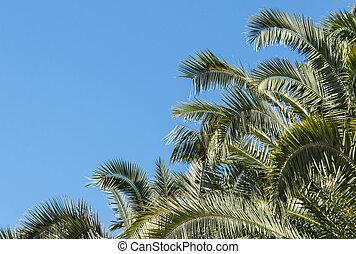 palm tree canopy against blue sky