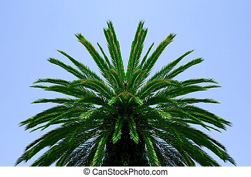 Palm tree canopy green