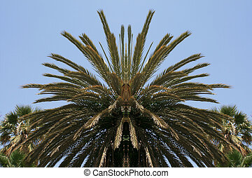 Palm tree canopy reflection