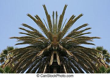 Palm tree canopy reflection