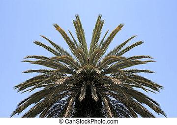Palm tree canopy