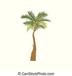 Palm tree cartoon vector Illustration