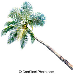 Palm Tree - colored and detailed illustration, vector