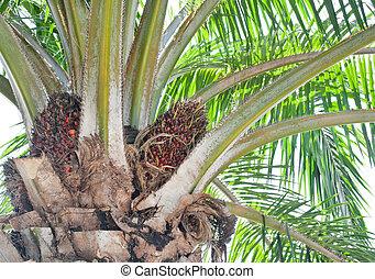 Palm tree closeup detail