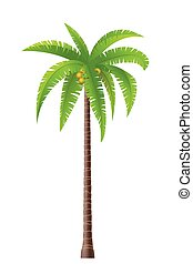 Palm tree - Coconut palm tree on white background