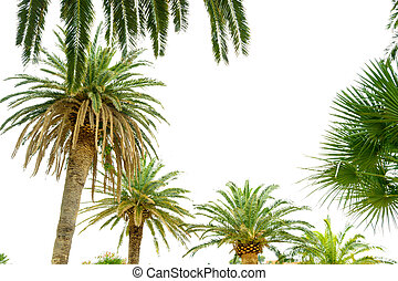 Palm Tree Crowns on Bright Sky Background. Summer Vacation Concept.