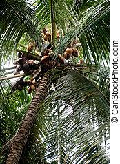 Palm Tree Detail