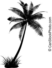 Detailed silhouette of a palm tree