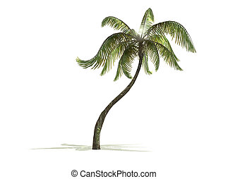 Palm tree - A palm tree isolated with white background and...