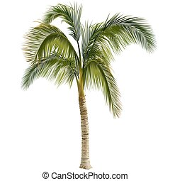 Palm tree - Highly detailed and coloured illustration
