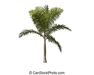 Palm Tree - 3D illustration of a palm tree