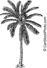Palm tree - Beautiful palm tree on white background