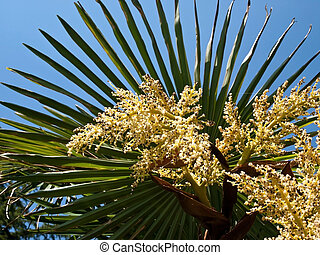 palm tree flowers