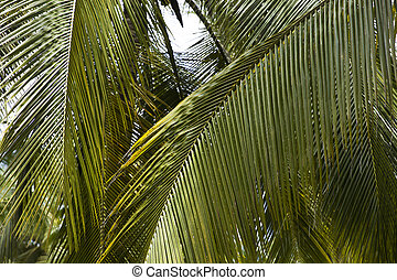 Palm tree forest in Tayrona Natural National Park, Colombia