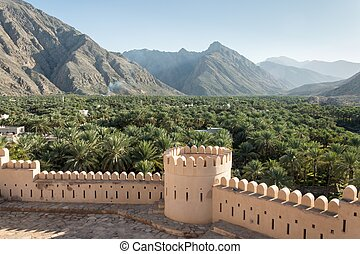 Palm tree forest with a wall, Oman