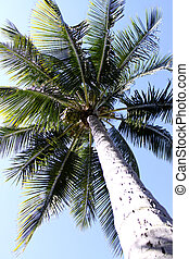 Palm Tree Full Frame - A full frame shot of a tropical palm...
