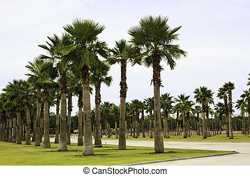 Palm Tree garden in the park