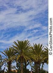 Palm Tree Group Sky
