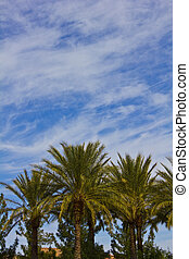 Palm Tree Group Sky