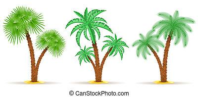 palm tree illustration isolated on white background