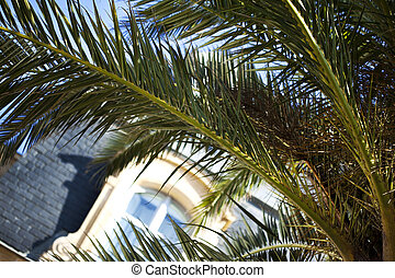 Palm tree in a residence