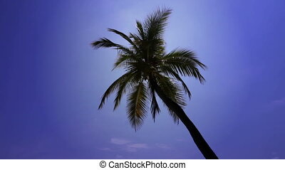 palm tree in a sunny day